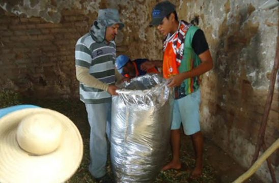 emater-criadores-de-taperoa-parende-armazenamento-de-racao-em-saco-silagem-2.jpg